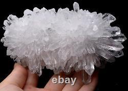 1.12lb White chrysanthemum QUARTZ Crystal Cluster Mineral Specimen Healing
