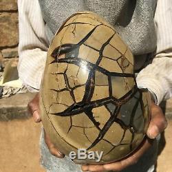 13.64LB Natural Dragon Septarian Geode Cluster quartz Crystal Egg Healing MA229