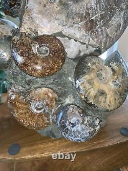 17.5LB Whole natural ammonite fossil conch crystal Cluster specimen healing