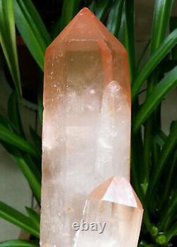 2.9LB 9in Big Angel Pink Healer Quartz Natural Red Skin Crystal Cluster Specimen