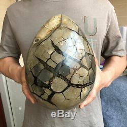 22.5LB Natural dragon septarian geode quartz cluster Egg crystal healing G550