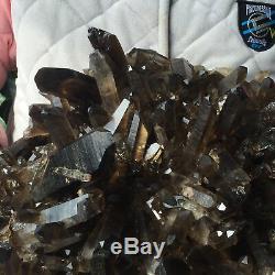33.0lb Huge Natural Black Smoky Quartz Crystal Cluster Rough Healing Specimen