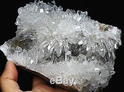4.03lb Clear Natural White Chrysanthemum QUARTZ Crystal Cluster Specimen/Stand