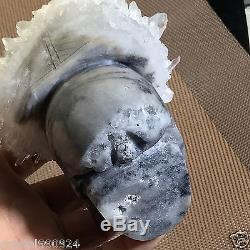4.6 Clear CLUSTER Natural Quartz Skull Carved Realistic Crystal Healing
