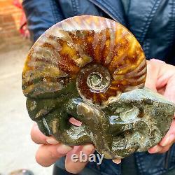 470G Rare! Natural Tentacle Ammonite FossilSpecimen Shell Healing Madagascar