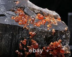 895.5g NATURAL Smoky Quartz Garnet Crystal Cluster Mineral Specimen