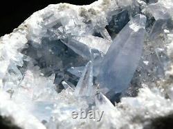 A BIG MUSEUM! Celestite or Celestine Crystal Cluster! 1575gr