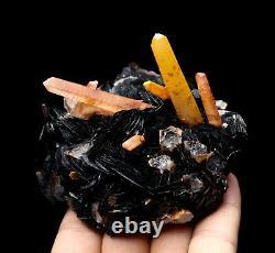 Citrine Crystal Cluster & Flower Shape Specularite Mineral Specimen/China Y01139