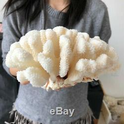 Natural White Coral cluster quartz crystal Reef specimen healing 4.44LB A567