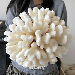 Natural White Coral cluster quartz crystal Reef specimen healing 5.47LB A566