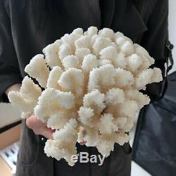 Natural White Coral cluster quartz crystal Reef specimen healing4.4LB A86