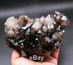 Skeletal Smoky Black Quartz Crystal Cluster Rare Clear Point Specimen Healing
