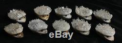 10 Hérisson Cluster Cristal Quartz Clair Naturel Sculpté Tête Sculpture Guérison