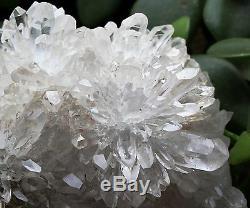 1230g Nouvelle Trouvaille, Spécimen De Grappes De Cristaux De Chrysanthème Blanc Naturel Et Clair