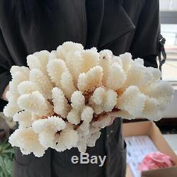 Blanc Naturel Cristal De Quartz De Cluster Coral Reef Spécimen Healing3.87lb A85