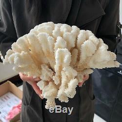 Blanc Naturel Cristal De Quartz De Cluster Coral Reef Spécimen Healing4.4lb A86