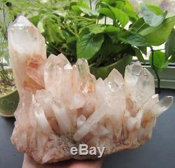 Haut! 2605g Naturel Pretty Citrine Quartz Crystal Cluster Guérison
