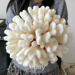 Spécimen Blanc Naturel Cristal De Quartz De Cluster Coral Reef Guérison 5.47lb A566