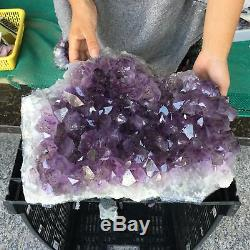 Spécimen En Cristal Minéral De Cluster De L'améthyste Naturel 33lb Guérissant Zx4434