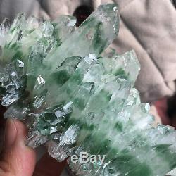Spécimen Minéral 31020 De Guérison De Grappe De Cristal De Quartz Fantôme Vert Énorme De 2.0lb